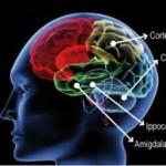 mentre bevi il tuo cervello va in fumo