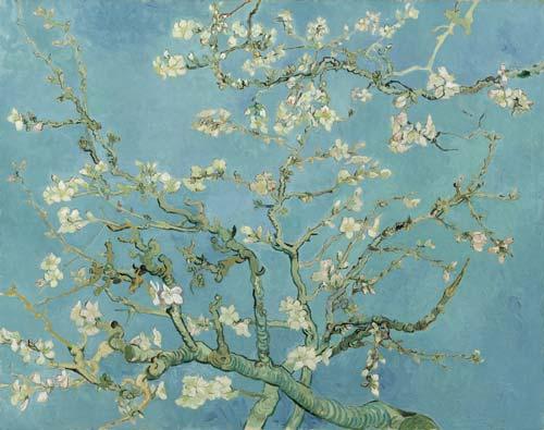 ramo di mandorlo in fiore