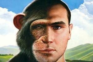 curiosità scimmie